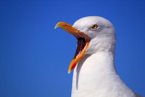คลังภาพถ่ายฟรี ของ กลางวัน, ขนนก, นกนางนวล, ภาพพอร์ตเทรต