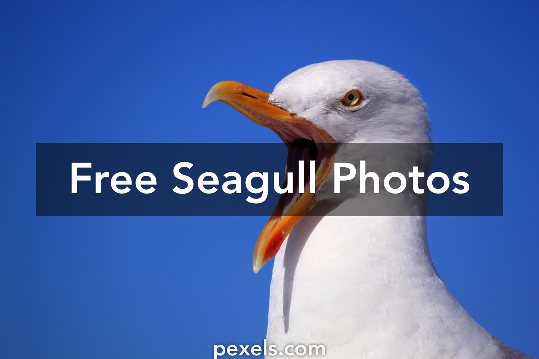 200 interesting seagull photos pexels free stock photos altavistaventures Image collections