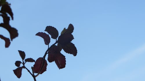 Free stock photo of plain, plant, shade