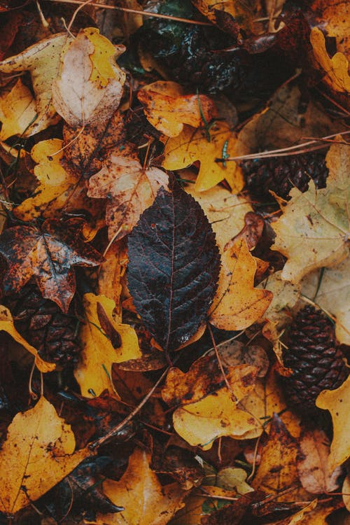 Assorted colorful autumn leaves and pine cone