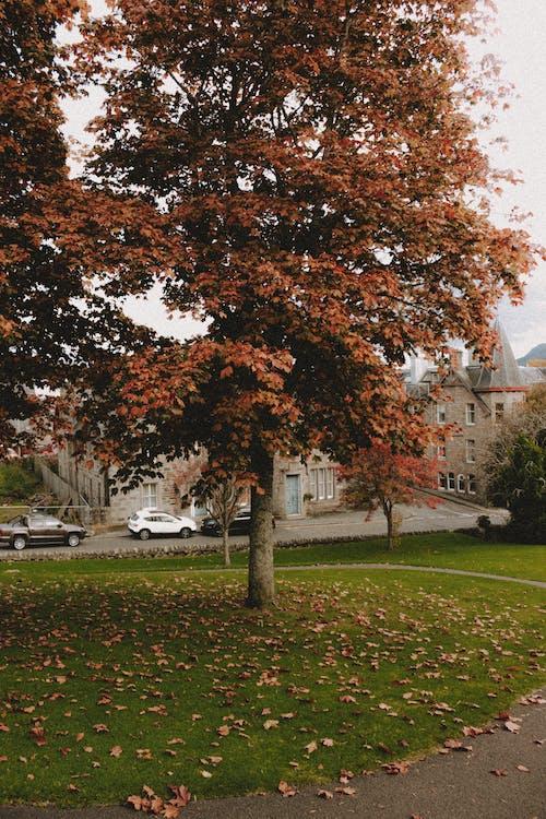 Autumn tree on lawn near road in city park