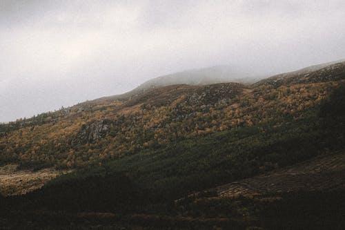Imagine de stoc gratuită din aer, arbust, armonios