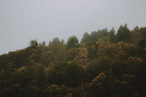 Picturesque view of autumn trees growing in woods under foggy sky in daylight