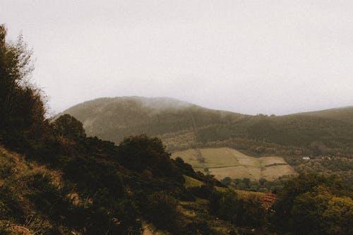 Imagine de stoc gratuită din agricol, anotimp, arbore