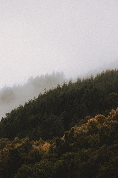 Imagine de stoc gratuită din amurg, anotimp, arbore