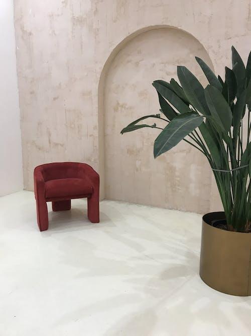 Foto d'estoc gratuïta de antic, arquitectura, art, cadira