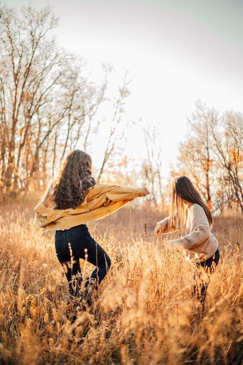 Photos gratuites de amis, arbre, aube, bois