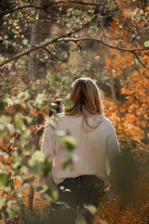 Photos gratuites de amour, arbre, campagne, coucher de soleil