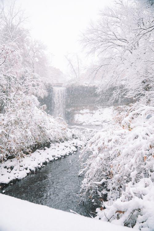 가지, 감기, 겨울, 경치의 무료 스톡 사진