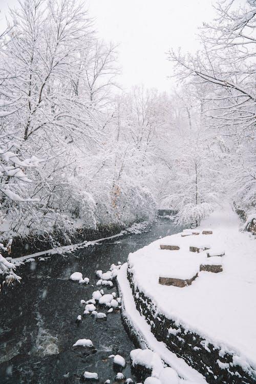 감기, 겨울, 경치, 계절의 무료 스톡 사진