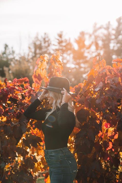 가을, 공원, 나무, 남자의 무료 스톡 사진