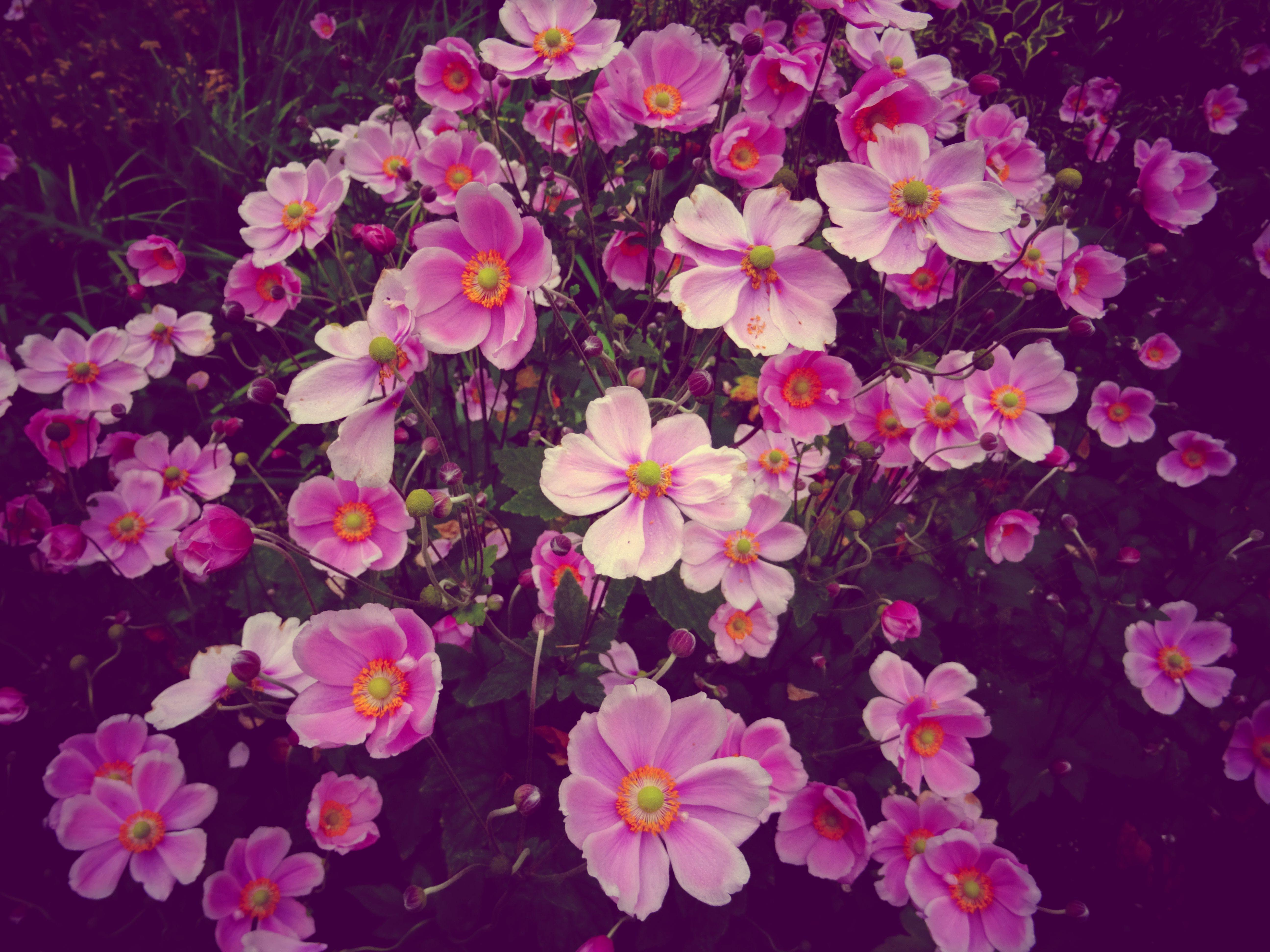 계절, 꽃, 꽃이 피는
