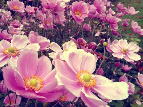 Nature wallpaper of nature, flowers, garden, petals