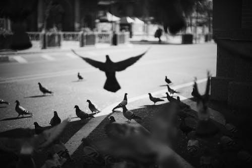 Ảnh lưu trữ miễn phí về bờ biển, Chân dung, chim, chim bồ câu