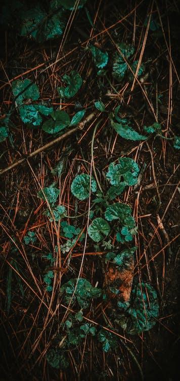 Imagine de stoc gratuită din arbore, aventură de pădure, codru