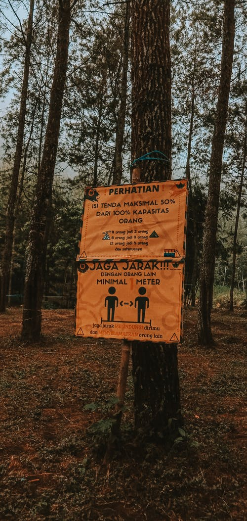 Foto stok gratis airy forest tree adventure wallpa petualangan hutan