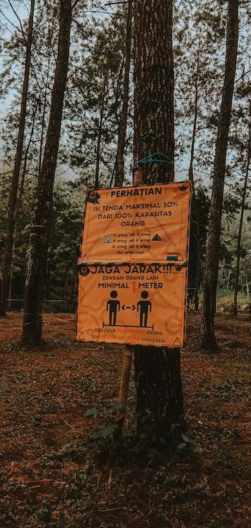 Fotobanka sbezplatnými fotkami na tému vzdušný lesný strom dobrodružstvo lesné dobrodružstvo wallpa