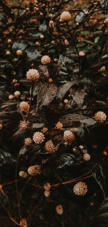 Fotos de stock gratuitas de aireado bosque árbol aventura bosque aventura wallpa