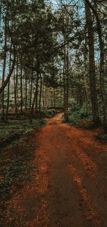 Foto stok gratis airy forest tree adventure wallpa petualangan hutan