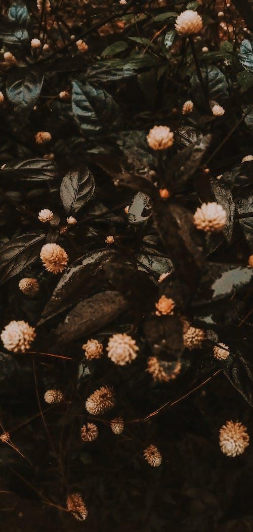 Photos gratuites de à feuilles persistantes, aéré forêt arbre aventure aventure en forêt wallpa, arbre, automne