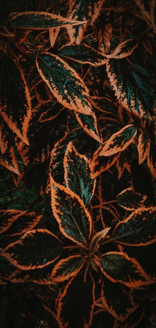 Photos gratuites de aéré forêt arbre aventure aventure en forêt wallpa
