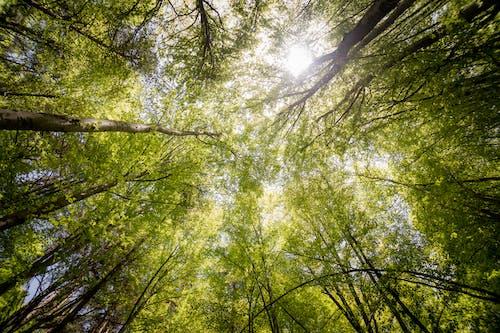 Immagine gratuita di alberi, alberi verdi, ambiente, boschi