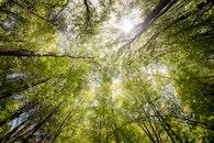 nature, trunks, sun
