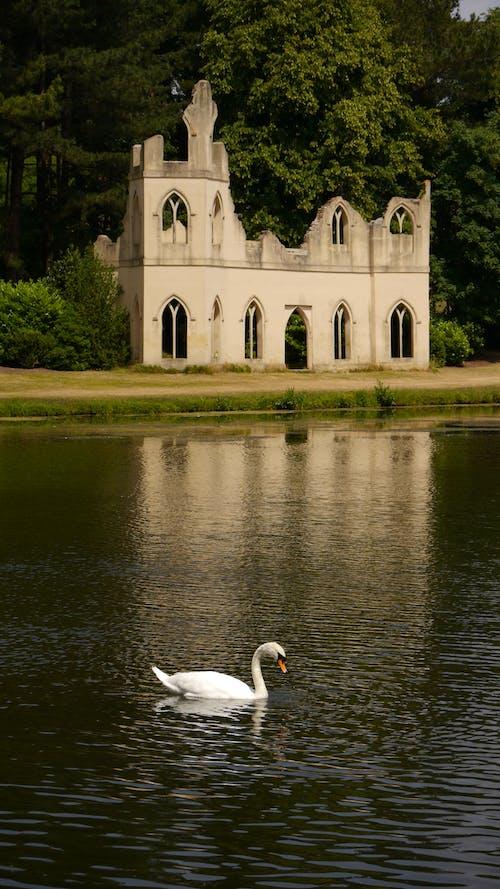 White Swan on River Near Green Grass Field