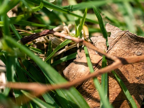 Kostnadsfri bild av gräs, gren, löv