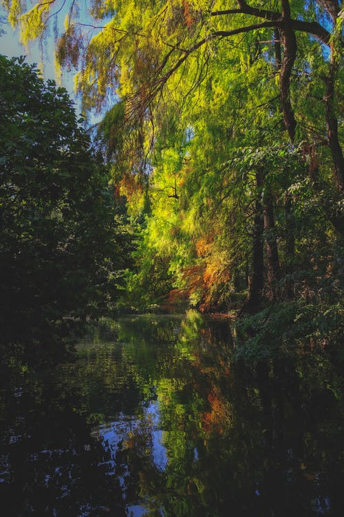 Overgrown autumn trees reflecting in river in woods