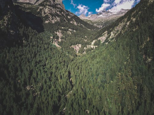 Green forest in high mountains on summer day