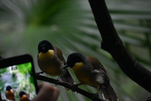 Základová fotografie zdarma na téma divočina, příroda