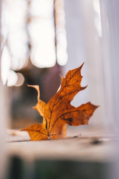 Бесплатное стоковое фото с глубина резкости, дерево, зима, золотистый
