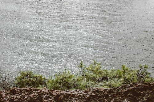 Ilmainen kuvapankkikuva tunnisteilla järvi, joki, kasvit