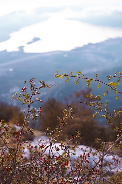 Ilmainen kuvapankkikuva tunnisteilla epätarkka tausta, kasvit, lehdet