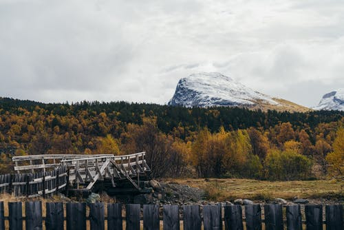 Wooden fence and shabby footbridge located in forest with coniferous and deciduous trees against high mountain top