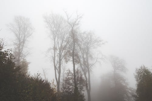 Foggy forest with high trees and bushes