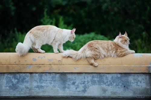 Kostnadsfri bild av katt, katter, kattungar, pott