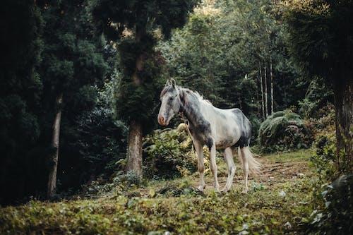 Foto profissional grátis de acasalar, animal, ao ar livre, área