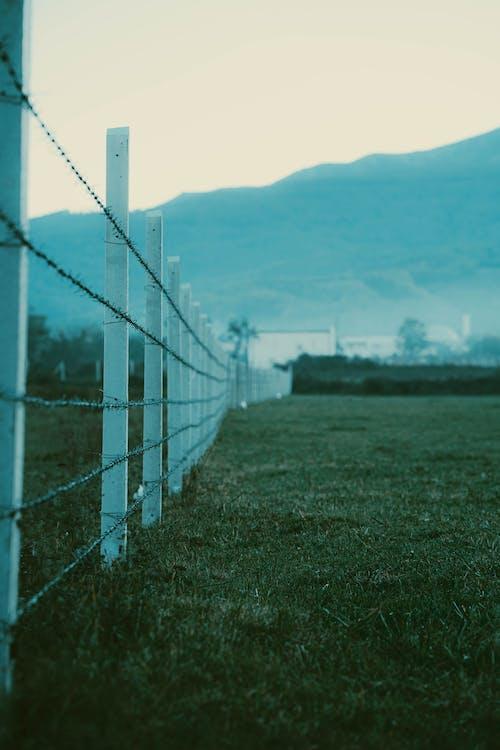 Fotos de stock gratuitas de alambre de espino, alambre de púas, campo