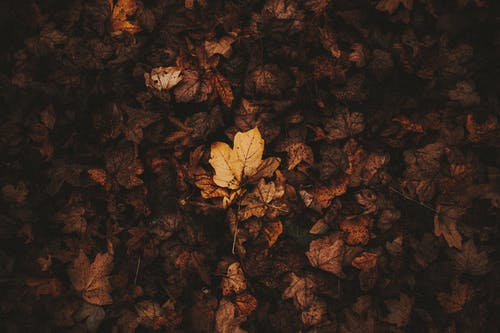 Dried autumn leaves on ground