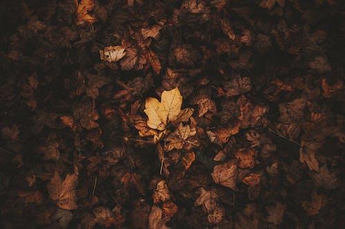 Daun Musim Gugur Yang Kering Di Tanah
