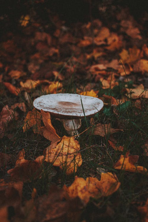 White Round Table on Brown Dried Leaves