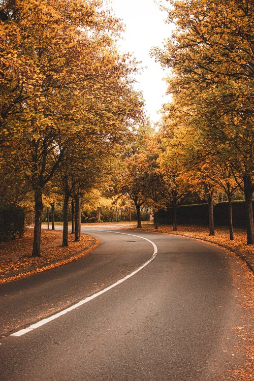 Empty paved road in autumn forest