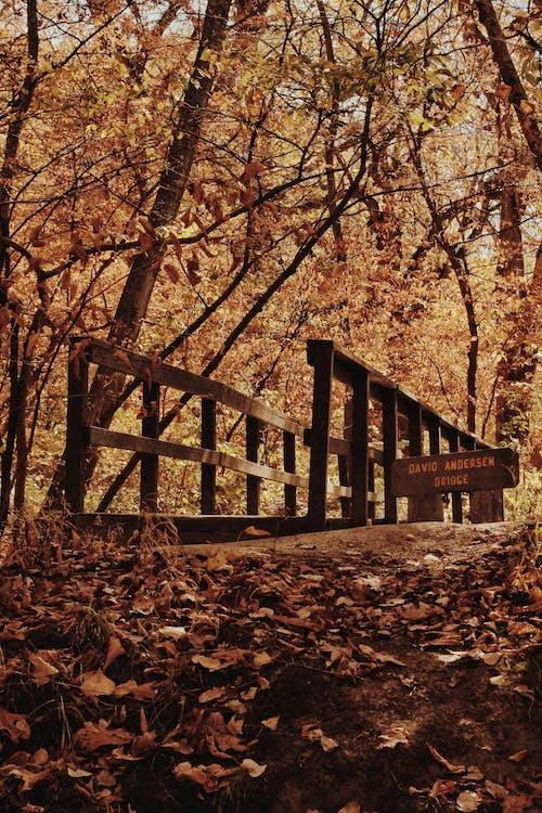 Brown Wooden Bridge Near Brown Trees