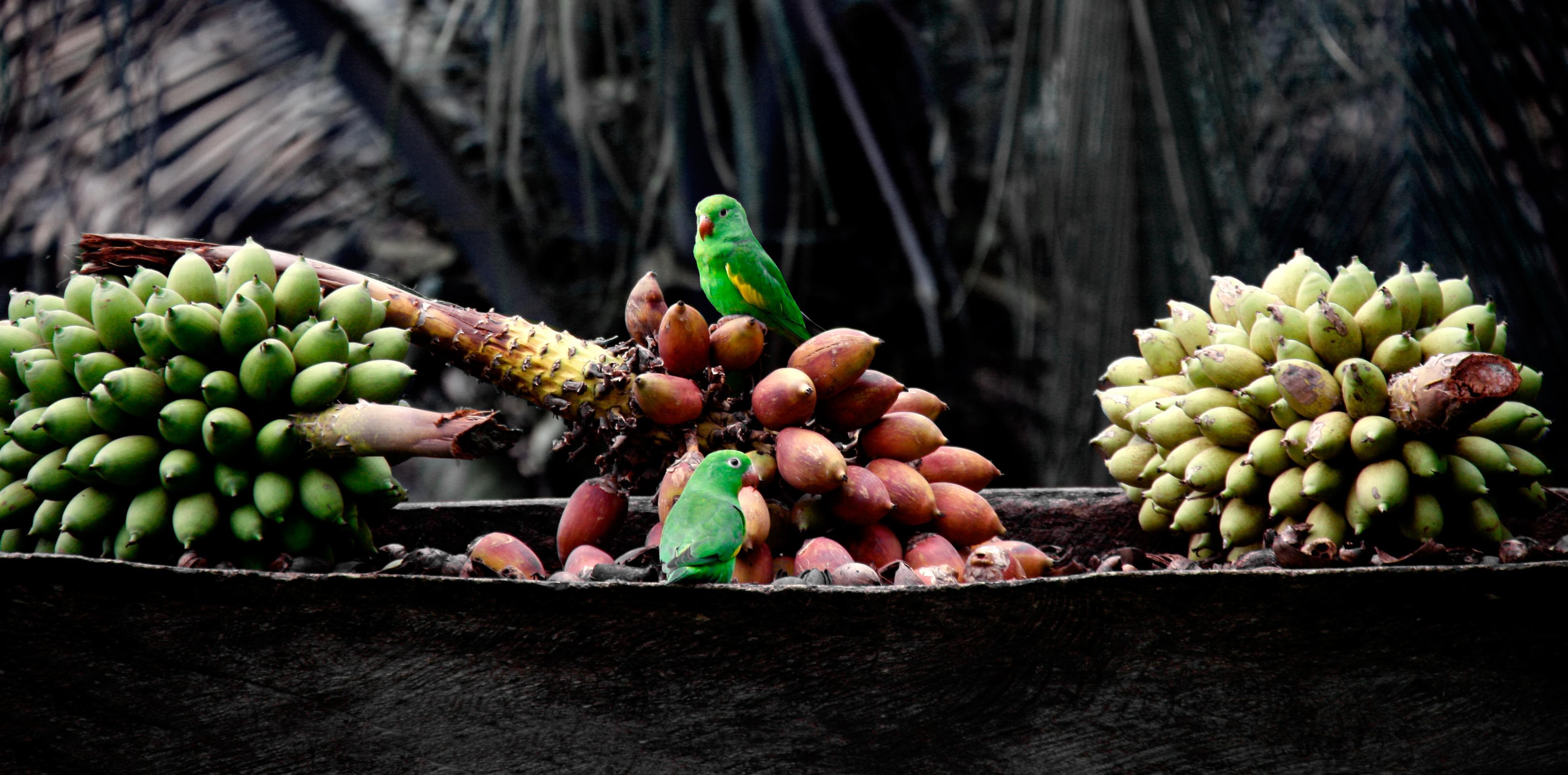 banana republic mexico tienda online