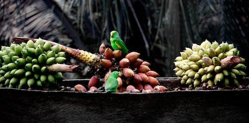 Foto profissional grátis de agricultura, bananas, chácara, cultivando