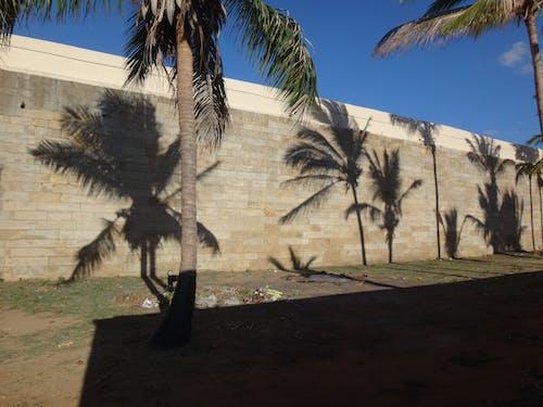 Free stock photo of nanguneri