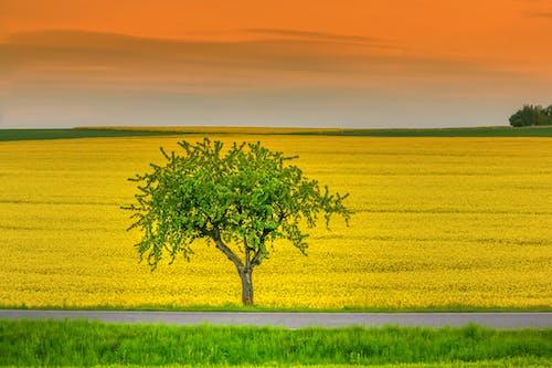 Green Tree on Yellow Flower Field