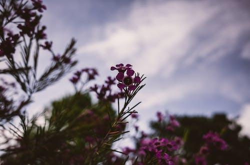 Kostnadsfri bild av blomma, himmel, träd
